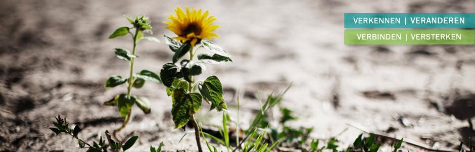 header-bloem