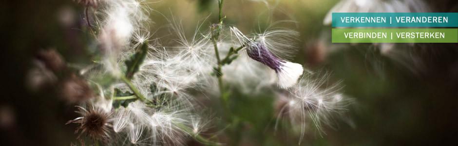 header-plant