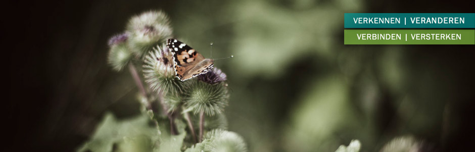 header-vlinder